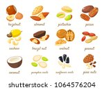cartoon nuts set   hazelnut ... | Shutterstock . vector #1064576204