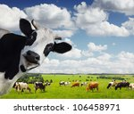 funny cow looking to a camera... | Shutterstock . vector #106458971