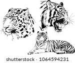 vector drawings sketches... | Shutterstock .eps vector #1064594231