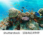 colorful underwater reef with... | Shutterstock . vector #1064614949