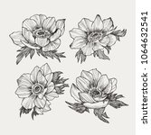 vector vintage anemone set.... | Shutterstock .eps vector #1064632541