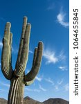 Small photo of Giant Saguaro pointing to the sky