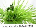 caterpillar decoration in the... | Shutterstock . vector #1064662751