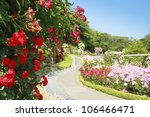 Stock photo close up beautiful rose in a garden 106466471