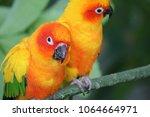 Parakeet parrot at forest