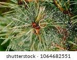 wedding rings lie on a tree in... | Shutterstock . vector #1064682551