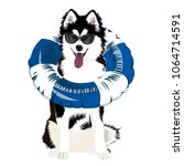 dog. swim ring. inflatable... | Shutterstock .eps vector #1064714591