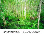 fern leaves in the forest.... | Shutterstock . vector #1064730524