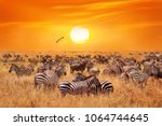 groupe of wild zebras and... | Shutterstock . vector #1064744645