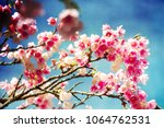 spring flowers. sakura | Shutterstock . vector #1064762531