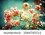 spring flowers. sakura | Shutterstock . vector #1064765111