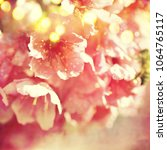 spring flowers. sakura | Shutterstock . vector #1064765117