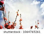 spring flowers. sakura | Shutterstock . vector #1064765261
