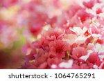 spring flowers. sakura | Shutterstock . vector #1064765291