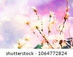 white magnolia flowers | Shutterstock . vector #1064772824