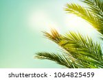 palm trees on the background of ... | Shutterstock . vector #1064825459