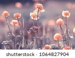 Stock photo vintage background little flowers nature beautiful toning design spring nature sun plants 1064827904