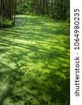 duckweed swamp surface. swamp... | Shutterstock . vector #1064980235