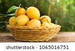 marian plum sweet fruit on... | Shutterstock . vector #1065016751