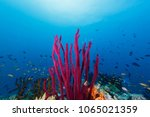 Small photo of small fish swim around tall purple soft coral Alcyonacea and blue ocean background
