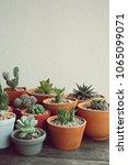 group of cactus pot plants... | Shutterstock . vector #1065099071