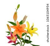 beautiful lily flower isolated... | Shutterstock . vector #1065104954
