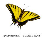 bright yellow two tailed... | Shutterstock . vector #1065134645