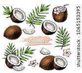 vector coconut hand drawn... | Shutterstock .eps vector #1065153395