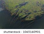 close up green seaweed | Shutterstock . vector #1065160901