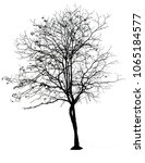 tree silhouette icon for... | Shutterstock . vector #1065184577