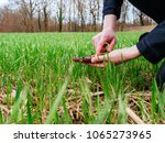 young agronomist agriculture... | Shutterstock . vector #1065273965