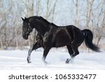 black stallion runs gallop in...   Shutterstock . vector #1065332477