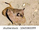 Meerkats On Sand In Sunny Day....