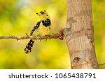 beautiful bird from africa ... | Shutterstock . vector #1065438791