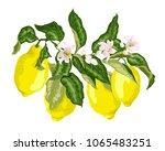 citrus fruit branch with... | Shutterstock .eps vector #1065483251