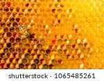 Closeup Of Bees On Honeycomb I...
