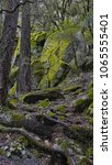 trees and rocks  yosemite  mist ... | Shutterstock . vector #1065555401