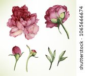 peonies and leaves. vector... | Shutterstock .eps vector #1065666674