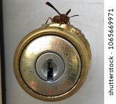 wasp on a doorknob   Shutterstock . vector #1065669971