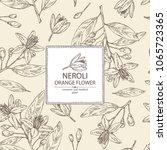 background with neroli  orange... | Shutterstock .eps vector #1065723365