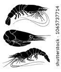 graphical set of shrimps... | Shutterstock .eps vector #1065737714
