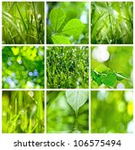 Collection Of Green Grass And...