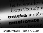 Small photo of ameba word in a dictionary. ameba concept.