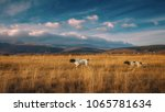 german pointer and english... | Shutterstock . vector #1065781634