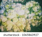 close up blue hydrangea with... | Shutterstock . vector #1065863927