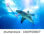 underwater white shark taking a ... | Shutterstock . vector #1065920837
