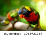 close up of a colorful rainbow...   Shutterstock . vector #1065931169
