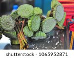 lotus seed  also know as a...   Shutterstock . vector #1065952871