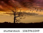 Silhouette Of A Tree That...