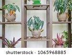tree in pot decorate on steel... | Shutterstock . vector #1065968885